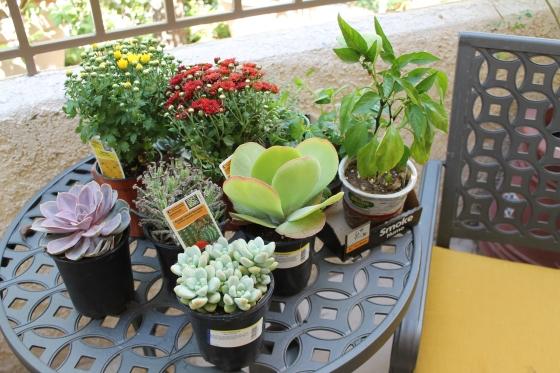 fall container garden update